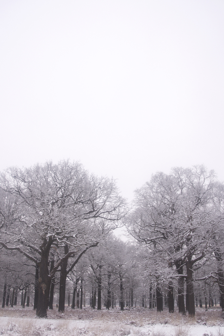 Snowy Richmond Park