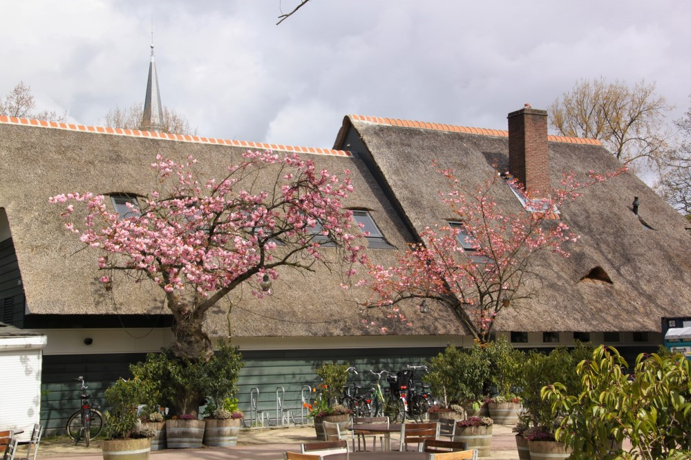 Groot Melkhuis thatched roof