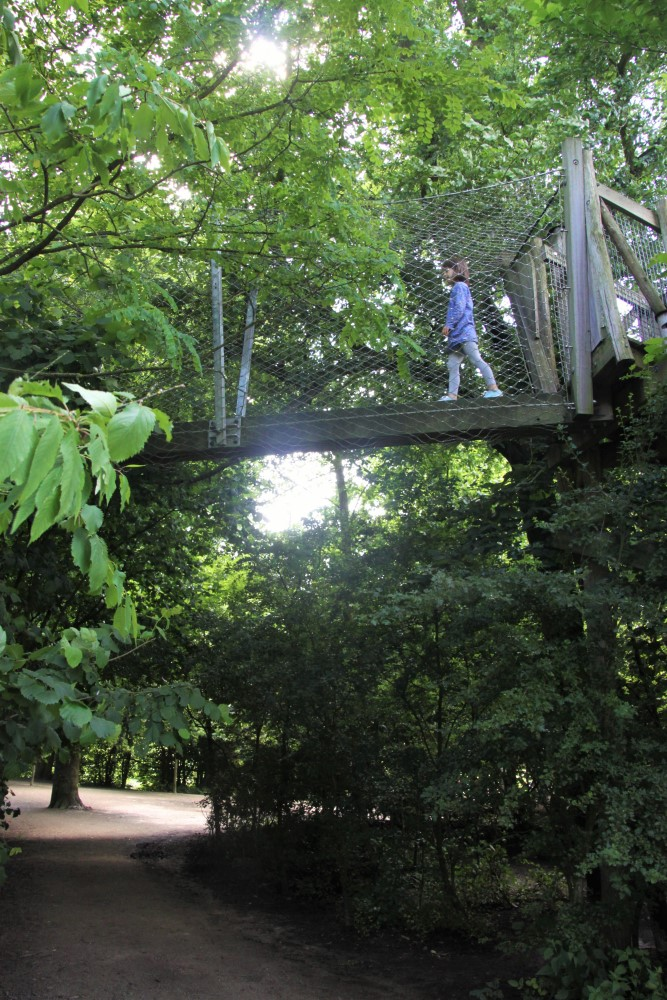 High in the treetops at Vondelpark_renamed_27210