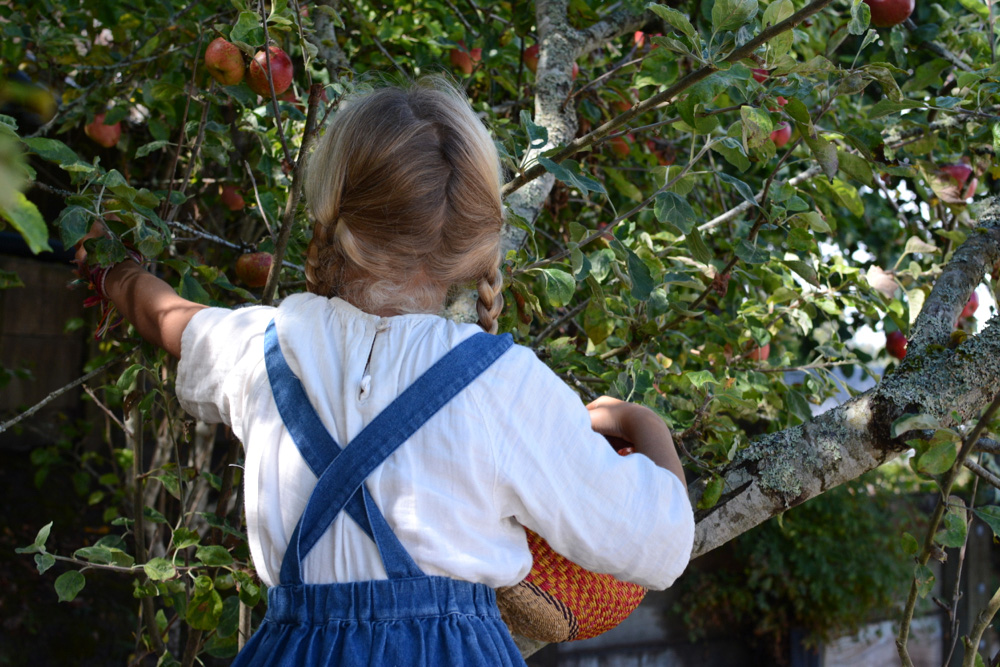 ivy picking apples