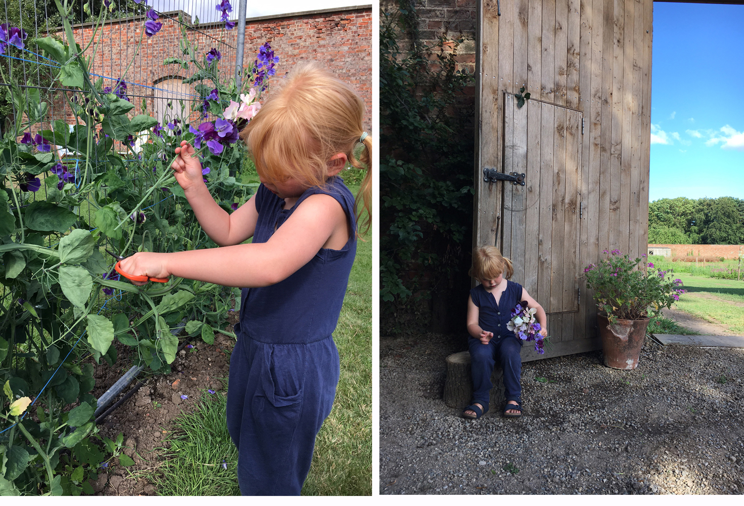 florence-picking-sweetpeas
