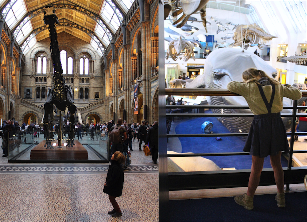 natural-history-museum-dippy-blue-whale
