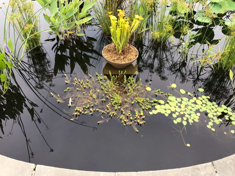 Aquatic garden at Wave Hill