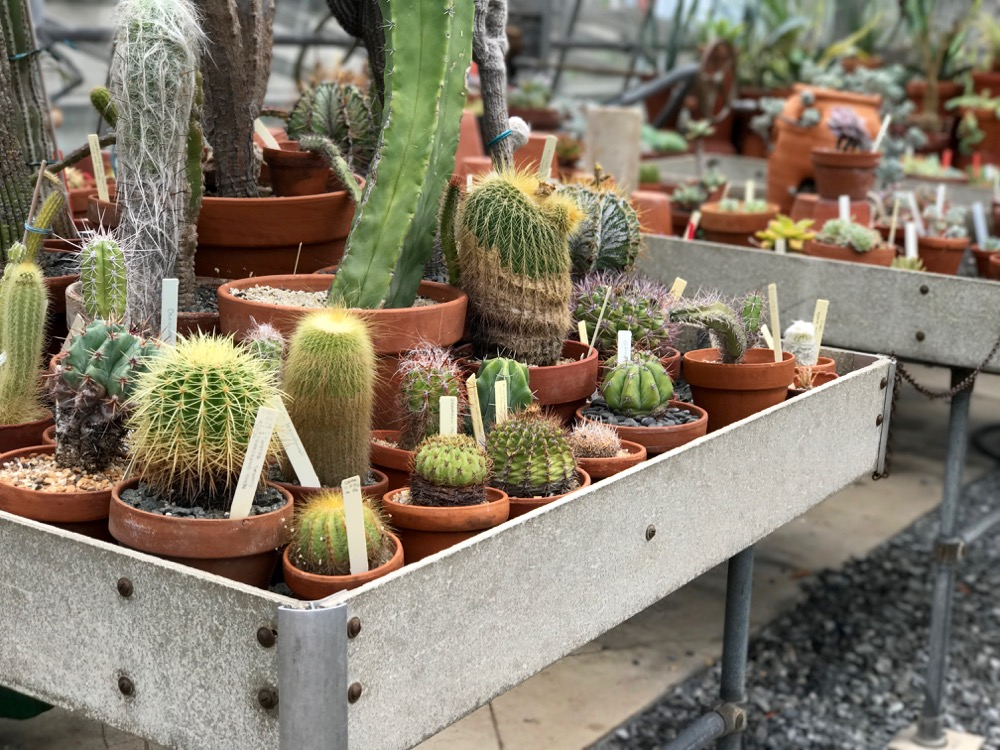 Cactus table in conservatory at Wave Hill