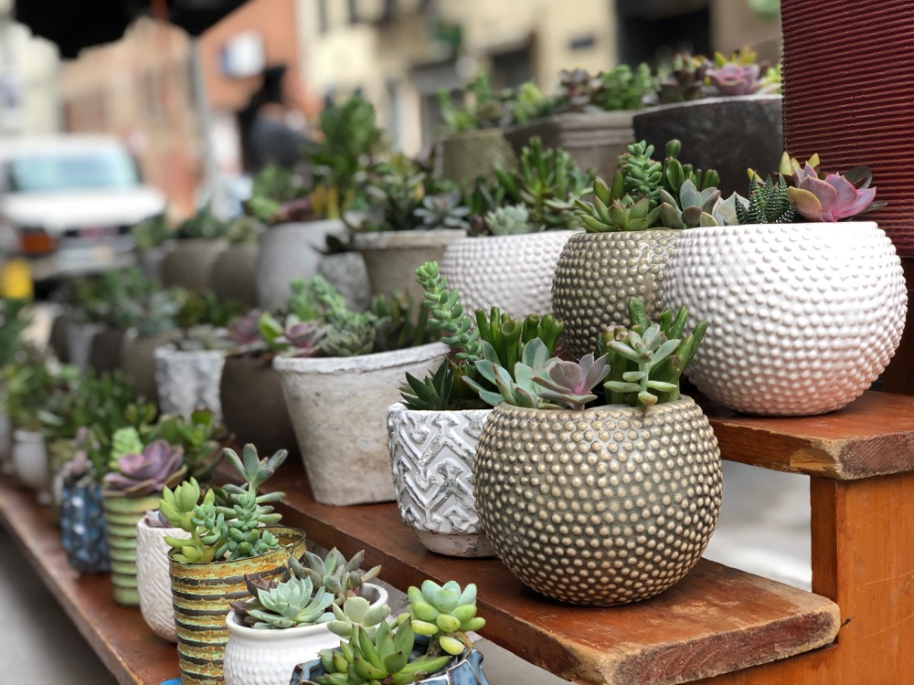 Succulents at the Brooklyn Flea