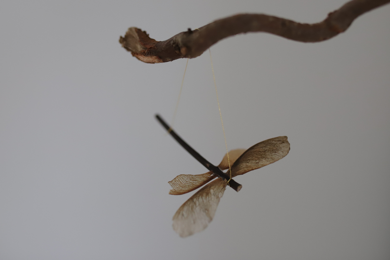 Maple seed dragonfly ornament