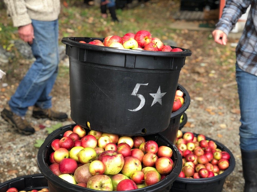 Bushels of apples at the cider pressing